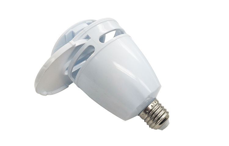 insect led